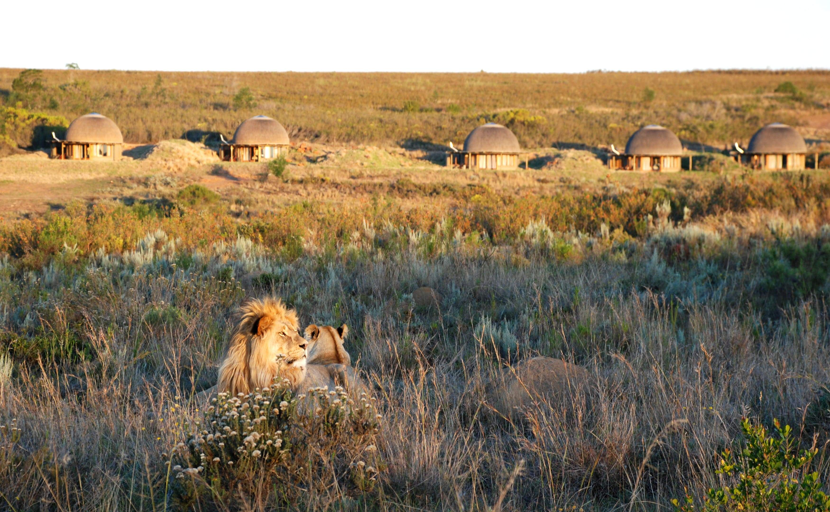 Gondwana Private Game Reserve offers the chance to see the Big 5 and play Pinnacle Point Gofl Course