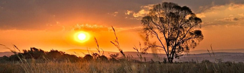 South African Bush Sunset