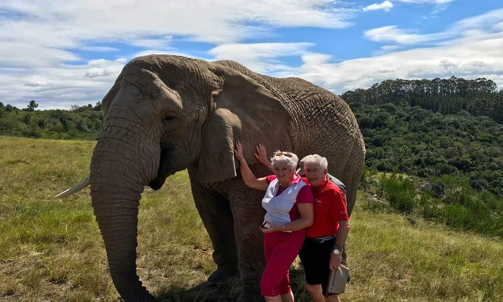 Petting the elephants at Knysa