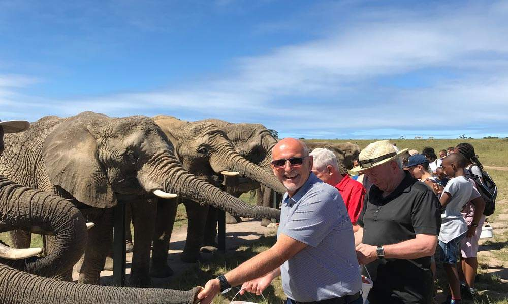 Feeding the elephants at Knysna