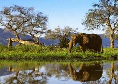 zimbabwe-safari-golf-holidays-2