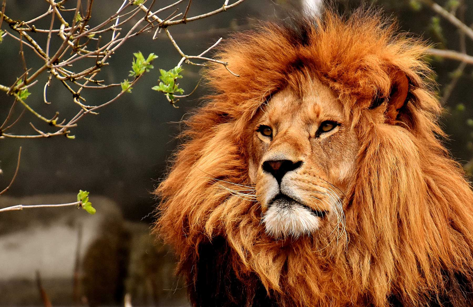 Kenya Golf Holidays & Safari's