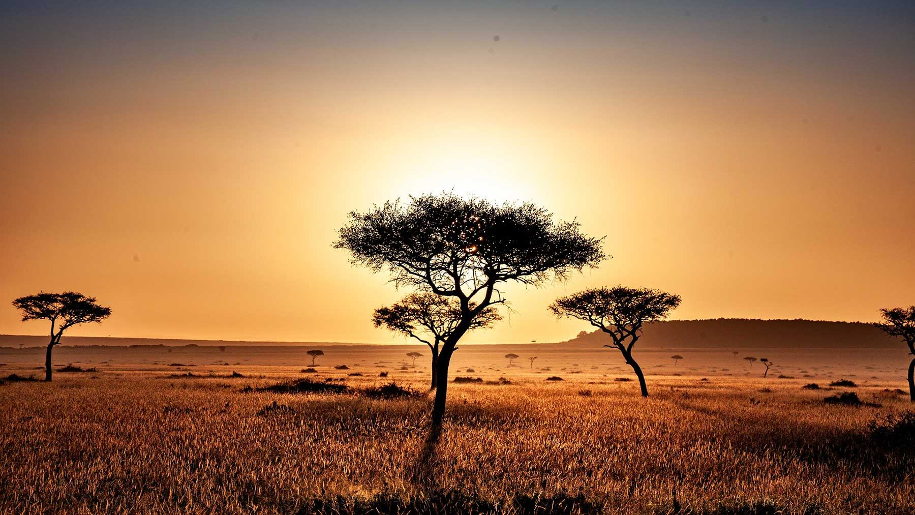 Kenya tree sunset